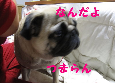 IMG_1059_1.jpg