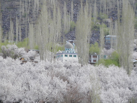 Kargil apricot with Karkitchu mosque