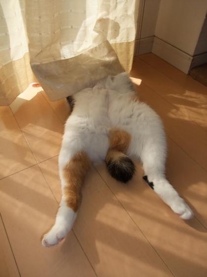 お昼寝中のエル