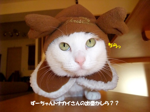 ずーちゃんトナカイ