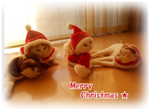 メリークリスマス 赤1