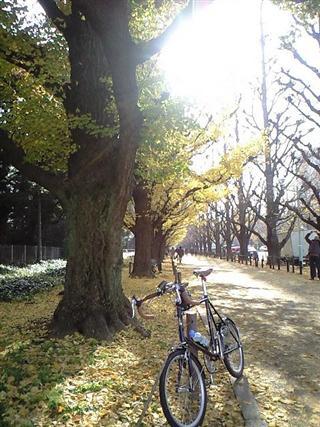 神宮外苑の並木