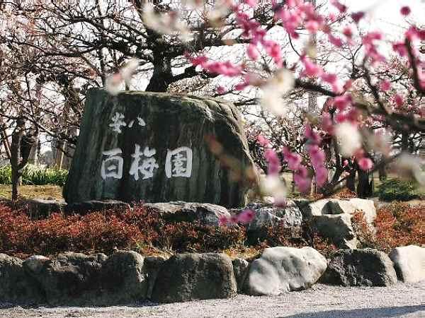 岐阜県 百梅園3