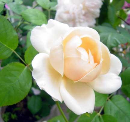 20090513bg010.jpg