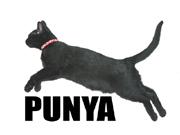 PUNYA