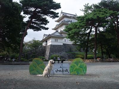 2009_1003小田原箱根産業祭り0011