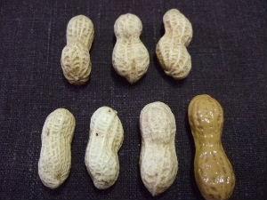 ピーナッツってかわいい!