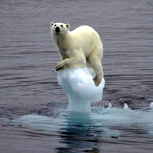 オーストラリアが温暖化でヤバイことに なんとか ネット。