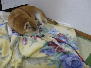 今日からここで寝るわ