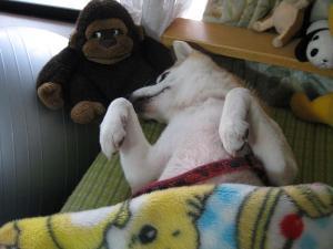 毛布かぶって昼寝中