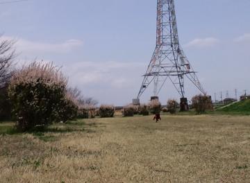 yukiyanagi20123.jpg