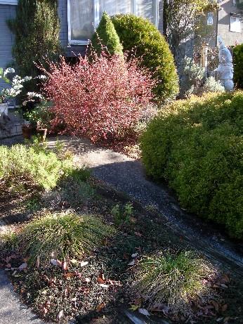 冬色ガーデン