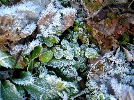 霜の花01