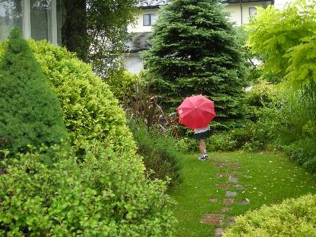 雨の日ガーデン1