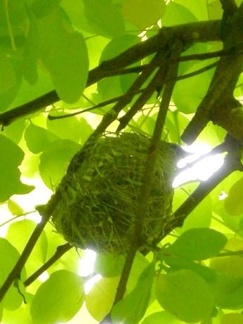 メジロちゃんの巣