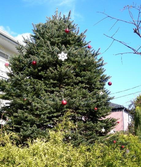 今年のツリー1
