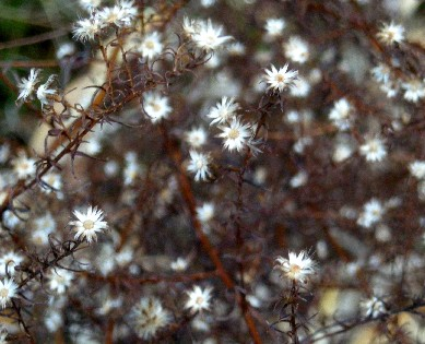 冬の花!?