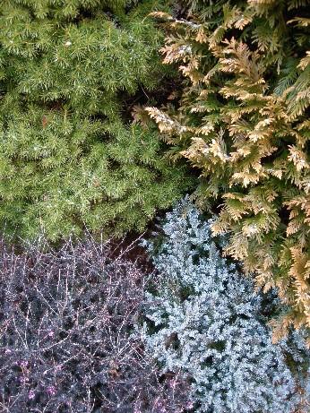 冬色の美1