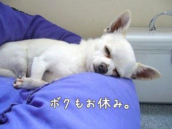 bokumooyasumi copy