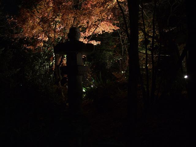 森の響(夜)0013