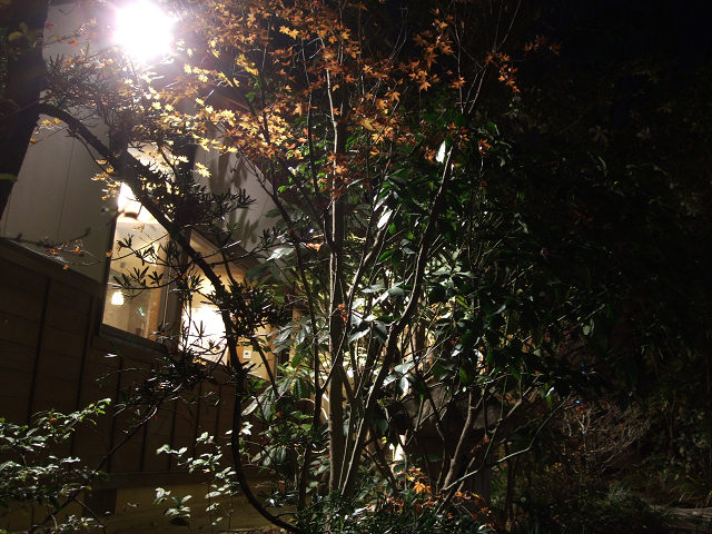 森の響(夜)0014