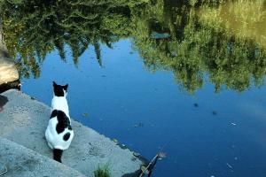 青空猫 日比谷公園