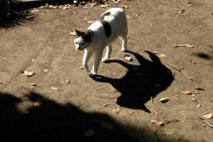 影猫 日比谷公園