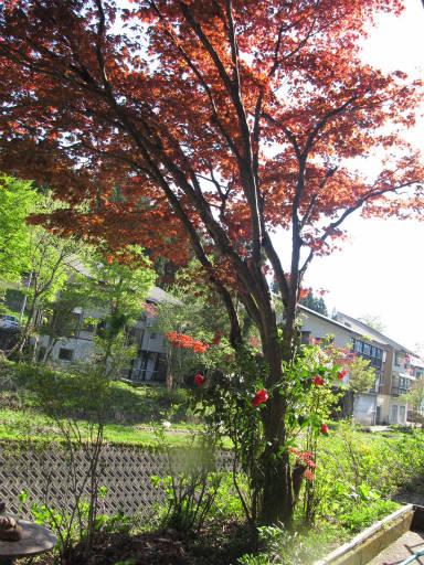 20110515・上野鉱泉16