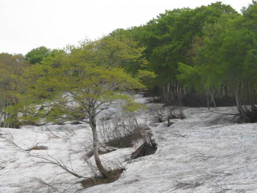 20110515・菖蒲高原上部19