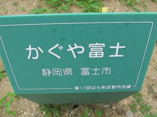 20110625・敷島公園ばら園のバラ29-1