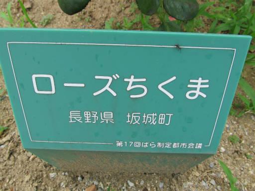 20110625・敷島公園ばら園のバラ28-1