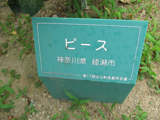 20110625・敷島公園ばら園のバラ27-1