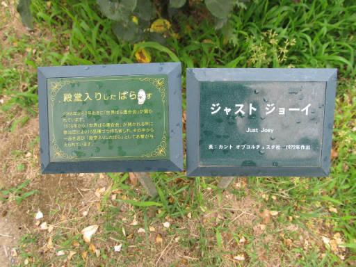 20110625・敷島公園ばら園のバラ35-3?