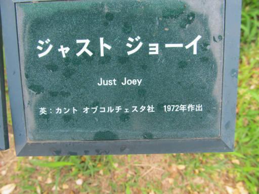 20110625・敷島公園ばら園のバラ35-1