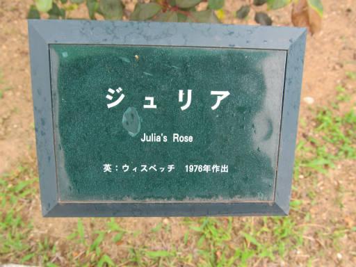 20110625・敷島公園ばら園のバラ44-1