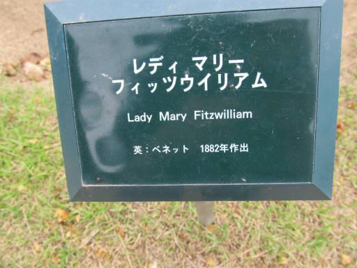20110625・敷島公園ばら園のバラ48-1