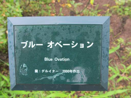 20110625・敷島公園ばら園のバラ56-1