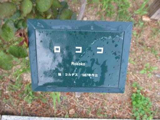 20110625・敷島公園ばら園のバラ60-1