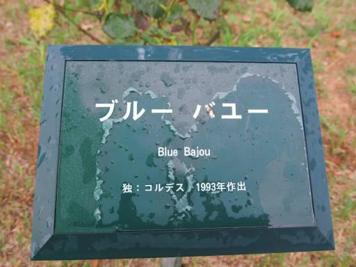 20110625・敷島公園ばら園のバラ61-1