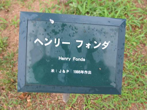 20110625・敷島公園ばら園のバラ63-1
