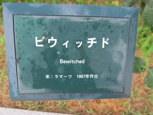 20110625・敷島公園ばら園のバラ67-1