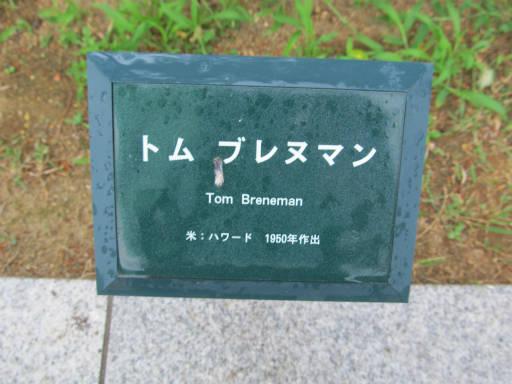 20110625・敷島公園ばら園のバラ66-1