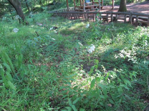 20110714・浅間山25