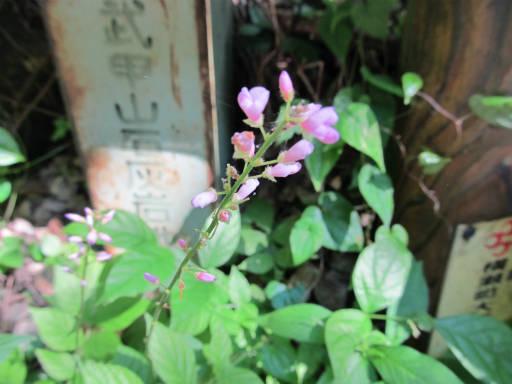 20110910・武甲山2-08・荒地