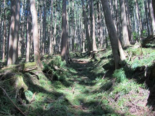 20110910・武甲山3-19