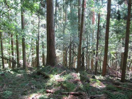 20110910・武甲山3-25・10:50発