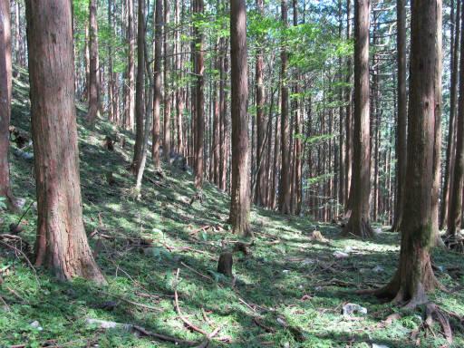 20110910・武甲山4-08