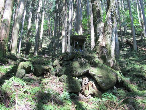 20110910・武甲山3-26 やや大