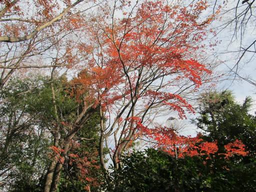 20111225・狭山湖14