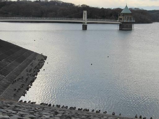20111225・狭山湖21